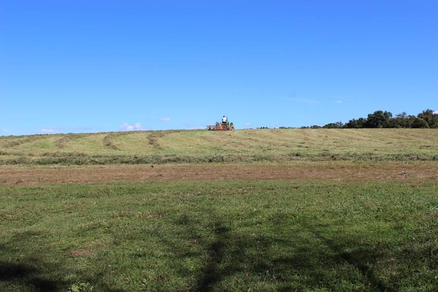 Yeehaw farm.